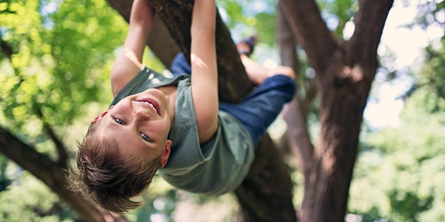 A child climbing in a tree. Photo