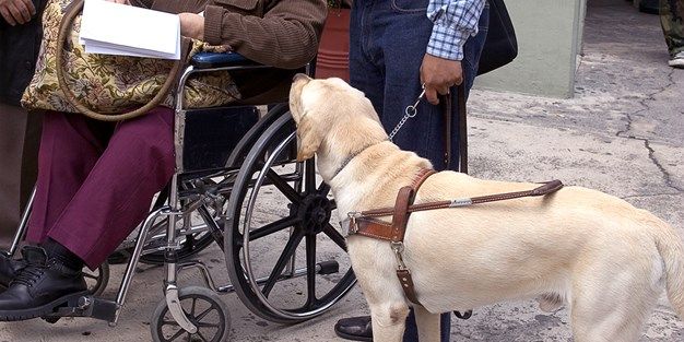 A person in a wheelchair and a blind person with a guide dog. Photo