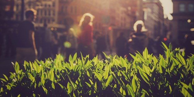 Close-up of blades of grass, the city and people walking in the background. The sun is shining with a warm glow. Photograph